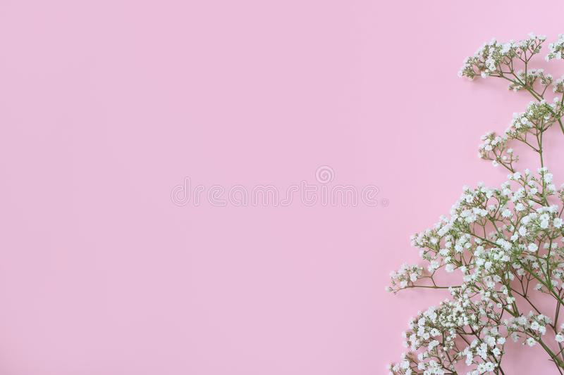 Styled stock photo. Feminine wedding, birthday desktop mockup with baby`s breath Gypsophila flowers. Pink background. Empty space. Floral frame, web banner royalty free stock photos