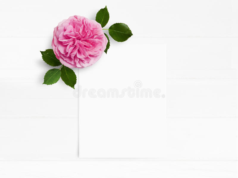 Styled stock photo. Feminine wedding desktop mockup with pink English rose flower and white empty paper card. Floral stock images