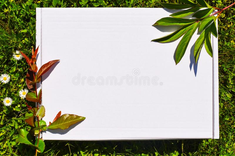 Styled stock photograpjy, mock-up digital file. Blank square for art work with green grass and white flowers background. Free royalty free stock image