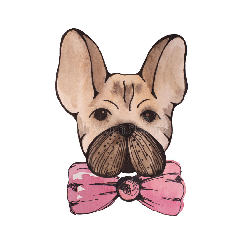 Stylised watercolor portrait french bulldog with pink bow on nec royalty free illustration