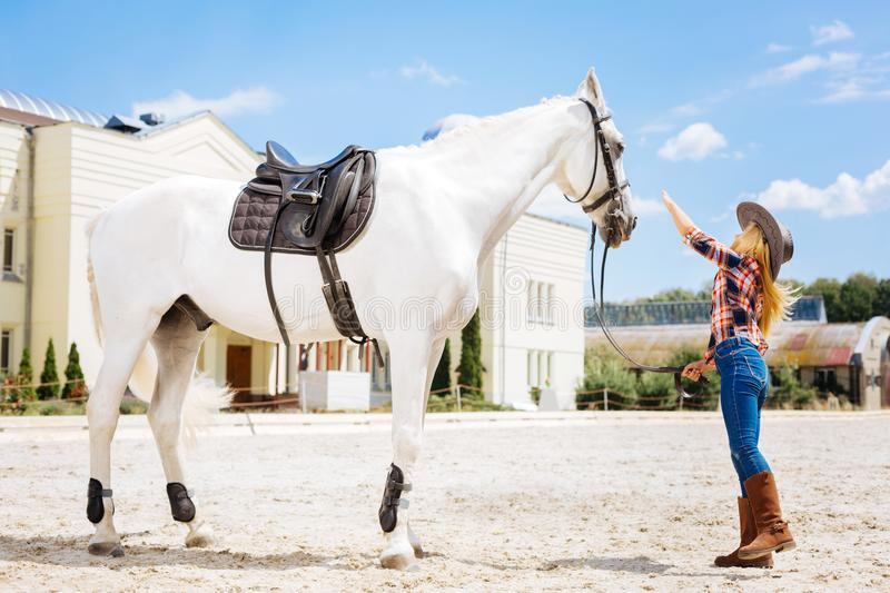 Stylish blonde-haired girl coming for touching white horse. Touching horse. Stylish blonde-haired girl wearing cowboy hat coming for touching white horse stock photography