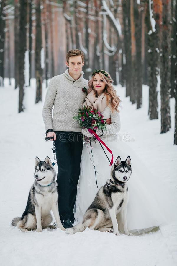 Stylish bride and groom with two siberian husky are posed on background of snowy forest. Artwork. Copy space stock image