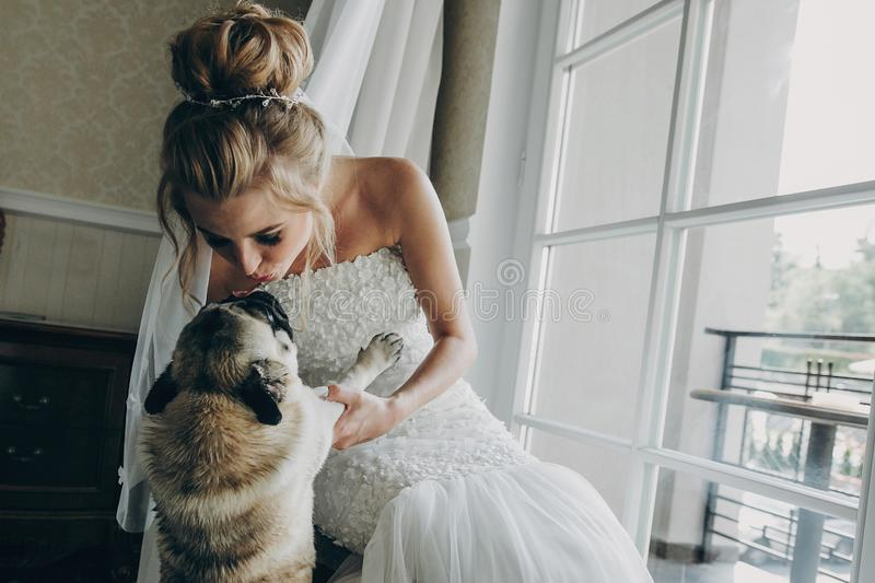Stylish bride kissing  pug dog in bow tie in soft light near window in hotel room. Gorgeous bride with her pet. Morning. Preparation before wedding ceremony stock photo