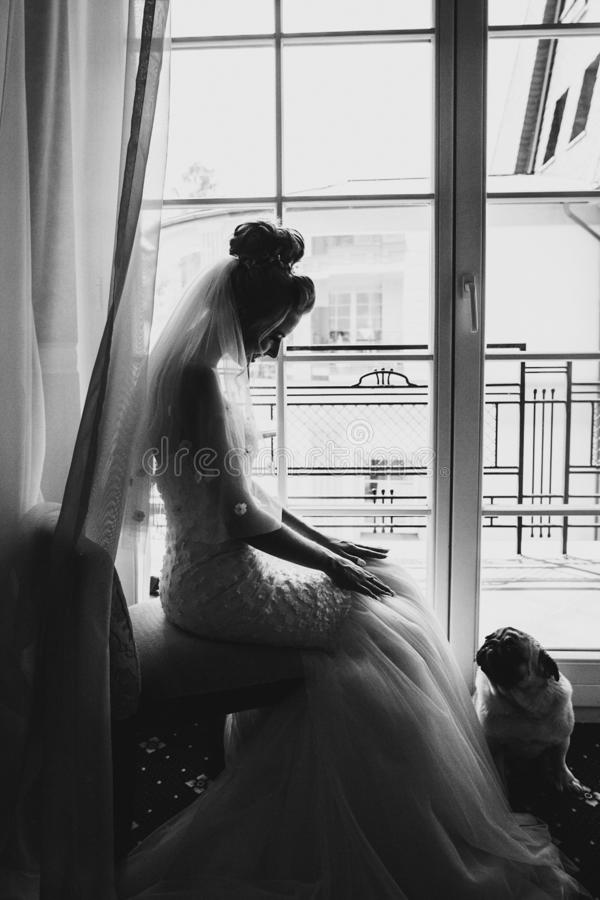 Stylish bride playing with pug dog in bow tie in soft light near window in hotel room. Gorgeous bride with her pet. Morning. Preparation before wedding ceremony stock images