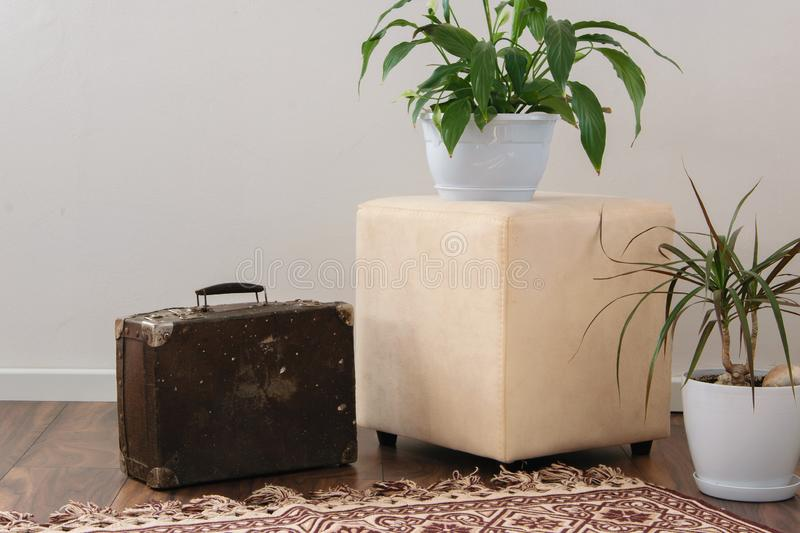 Stylish brightly part of living room with old vintage suitcase and potted plants, traditional handmade carpet. On luxury wooden floor, white wall with bright royalty free stock images