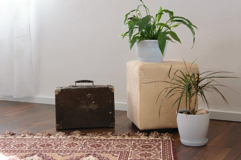 Stylish brightly part of living room with old vintage suitcase and potted plants, traditional handmade carpet. On luxury wooden floor, white wall with bright royalty free stock photo
