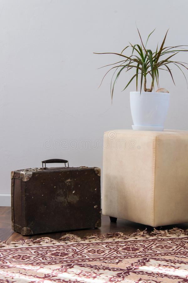 Stylish brightly part of living room with old vintage suitcase and potted plants, traditional handmade carpet. On luxury wooden floor, white wall with bright royalty free stock photos