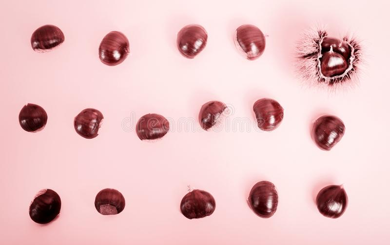 Stylish composition of chestnut on pink background. Stylish and elegant composition of chestnut on pink background stock photography