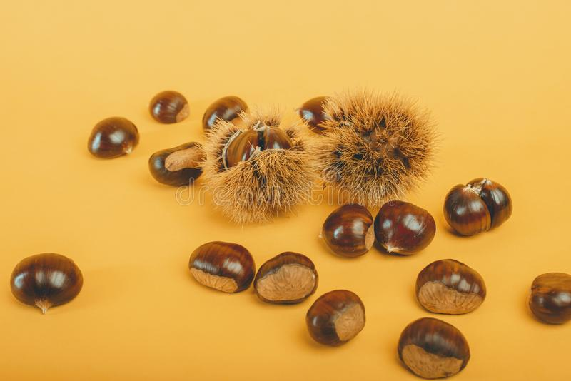 Stylish composition of chestnut on yellow background. Stylish and elegant composition of chestnut on yellow background royalty free stock image