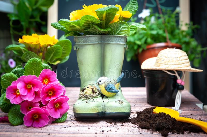 Stylish concept of gardening, planting planning, floriculture..Set of garden accessories. And flowers stock photo