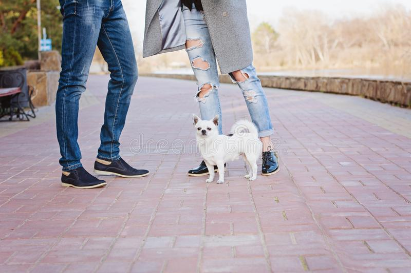 Stylish couple in love is walking with dog along the promenade stock photography