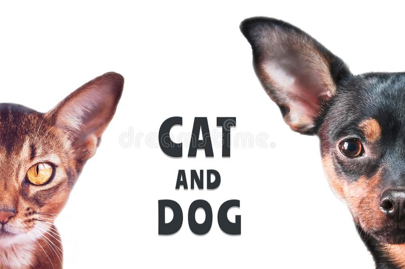 Stylish dog and cat portraits isolated on white, background,. With an inscription stock images