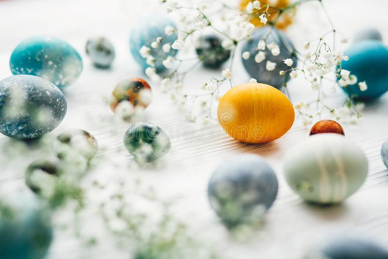 Stylish easter eggs with spring flowers on white wooden background. Modern easter eggs painted with natural dye in blue, grey, royalty free stock photos
