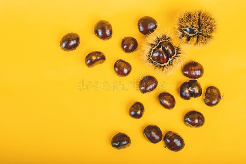 Stylish composition of chestnut on yellow background. Stylish and elegant composition of chestnut on yellow background royalty free stock photo