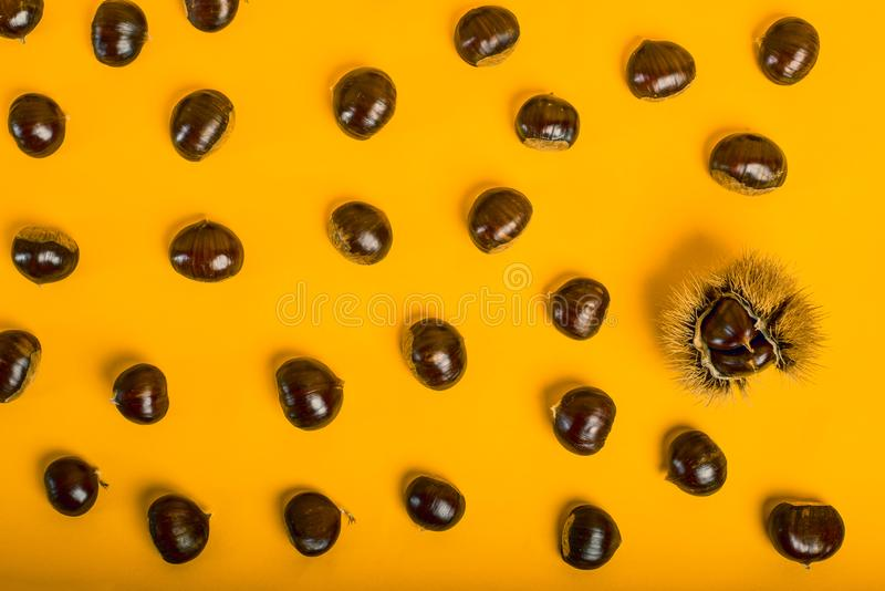 Stylish composition of chestnut on yellow background. Stylish and elegant composition of chestnut on yellow background royalty free stock photography