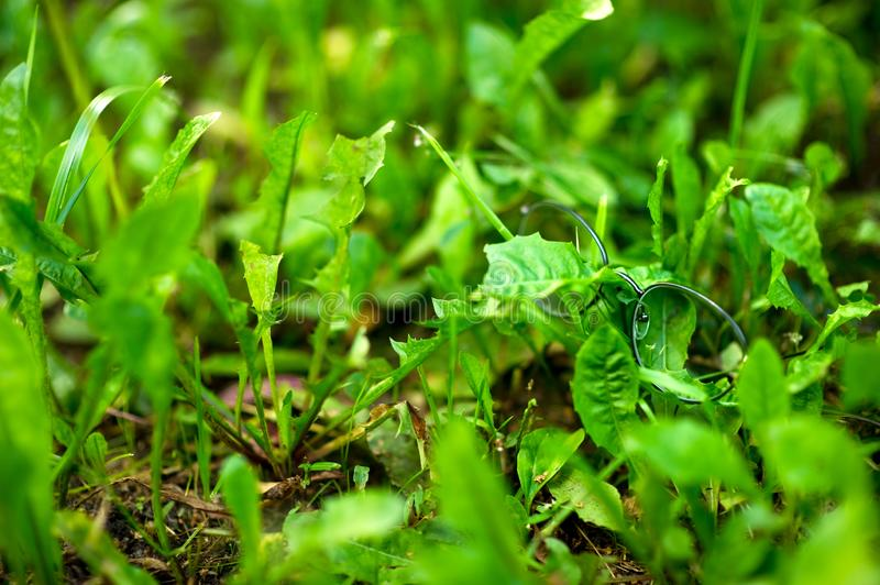 Stylish glasses for vision in a thin frame lie in the fresh green grass. royalty free stock image