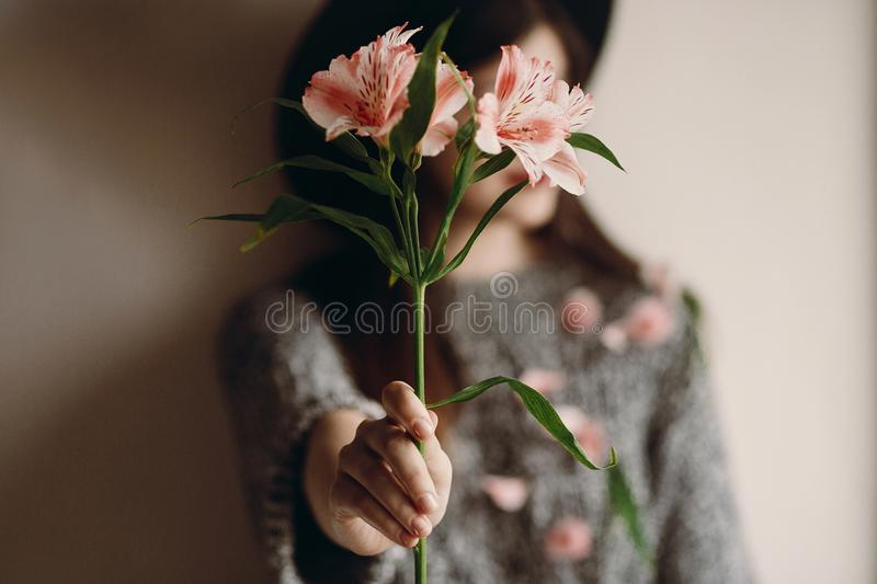 Stylish hipster girl in hat holding pink flowers and petals on s. Weater growing. boho woman with beautiful alstroemeria in hands. creative sensual female royalty free stock images