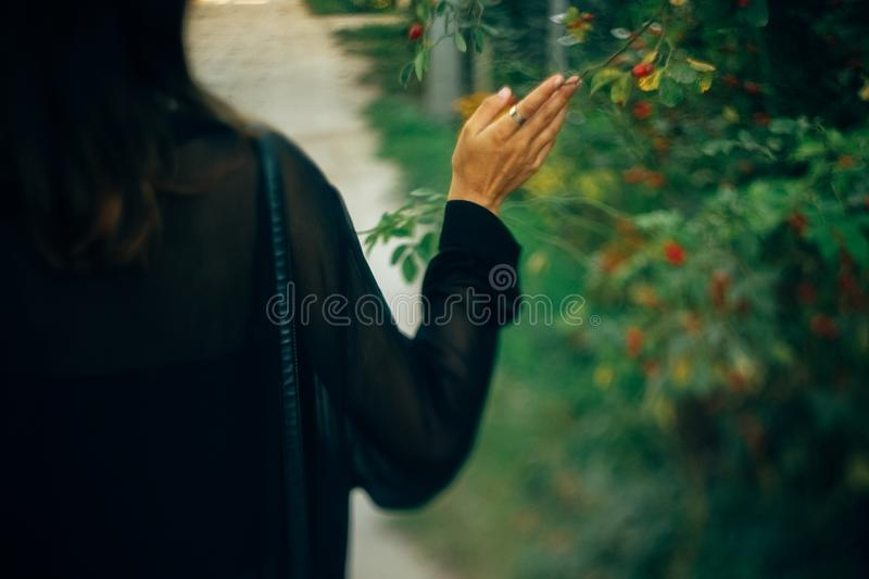 Stylish hipster girl walking in sunny light in park, atmospheric moment, back view. Fashionable woman holding branch at bush in. Evening. Selective focus. Space stock images