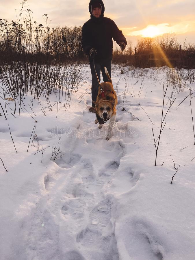 Stylish hipster man running with cute golden dog in snowy cold park. Man playing with his dog in winter white forest in warm royalty free stock images