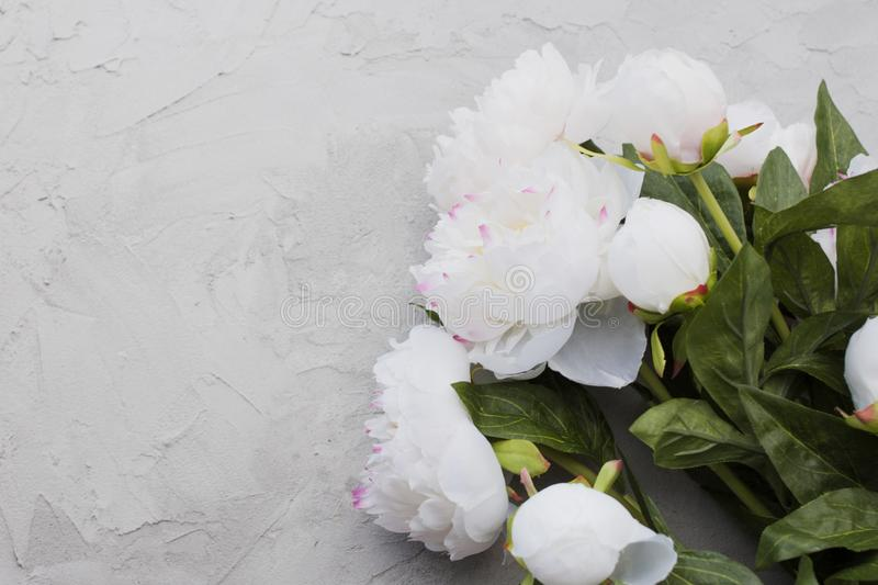 Stylish minimalist design with white peony on a gray background texture of cement. Boho loft style, copy space. frame of flowers royalty free stock photos