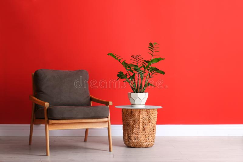 Stylish room interior with modern furniture and houseplant near red wall. Space for text royalty free stock images