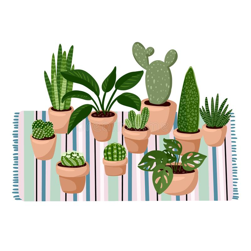 Stylish scandic living room interior - succulent potted plants on carpet. Home lagom decoration. Cozy season. Modern apartment stock illustration