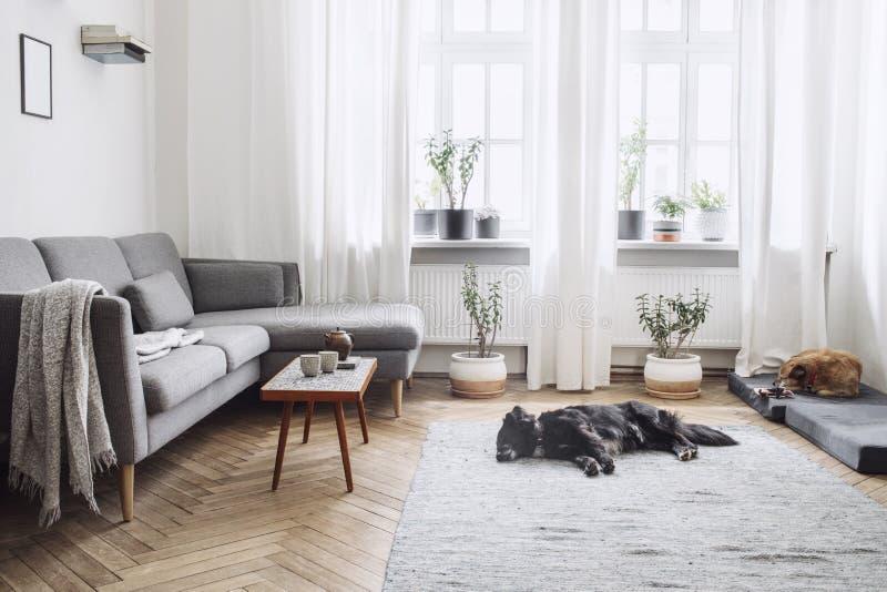Stylish scandinavian interior of living room with small design table ,sofa, lamp and shelfs. White walls, plants on the windowsill stock image