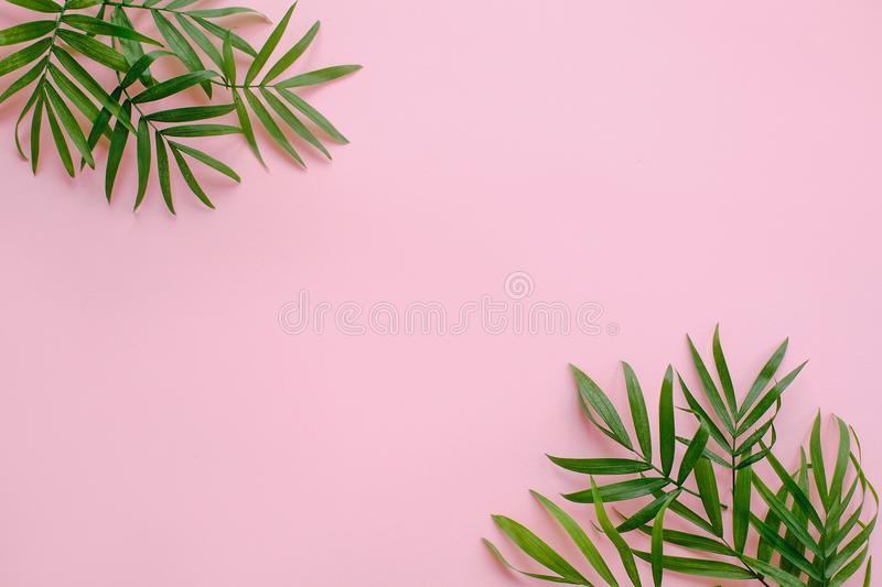 Stylish summer flat lay. fresh palm leaves border on pink background with space for text. modern image. top view. summer vacation. Concept. travel and royalty free stock image