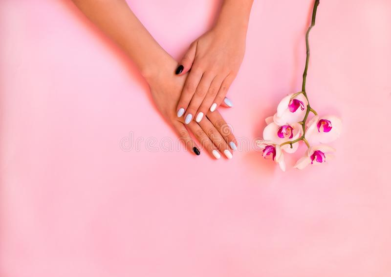 Nails care. Stylish trendy female manicure. Orchid flowers. Beautiful young woman`s hands on pink and blue background. stock image