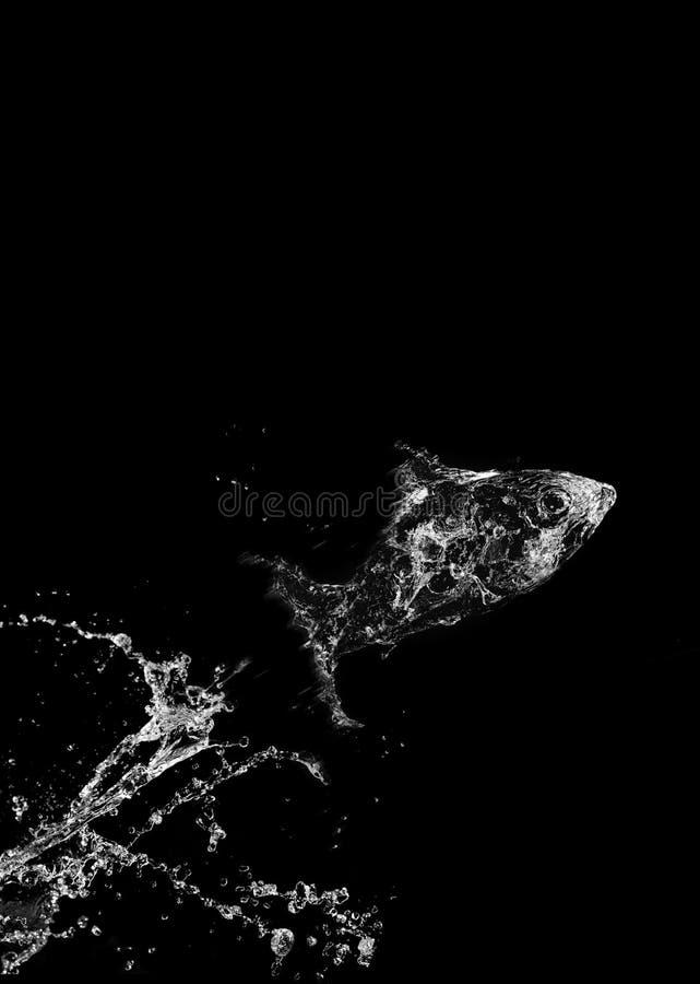Download Stylish water splash stock image. Image of background - 12351163