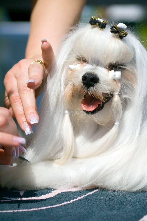 Download Styliste d'animal familier photo stock. Image du écorce - 725028