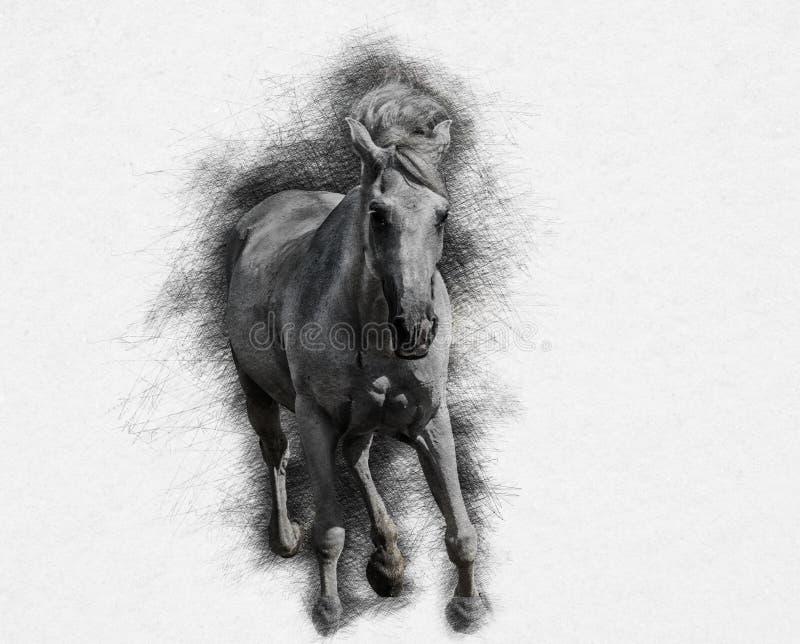 Stylization de galope do cavalo sob o desenho de lápis ilustração royalty free