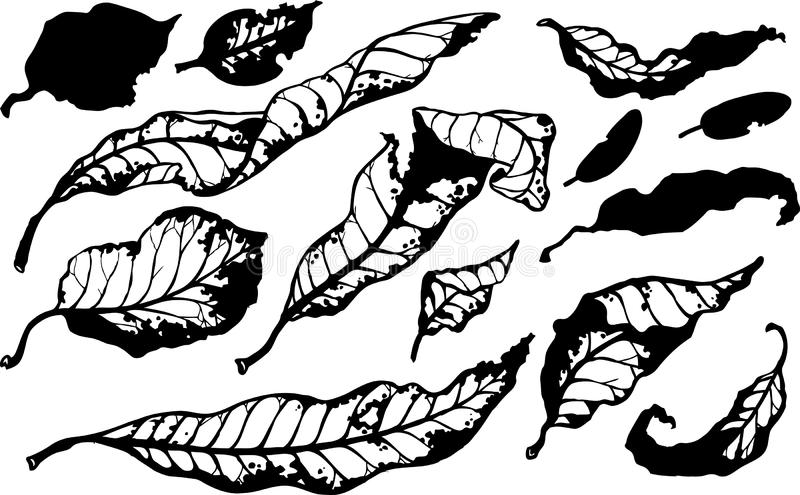 Stylized clack and white fall leaves. Black and white stylized fall leaves in an inky style royalty free illustration