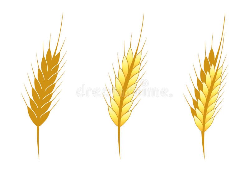 Stylized Ear Of Wheat Stock Vector Illustration Of