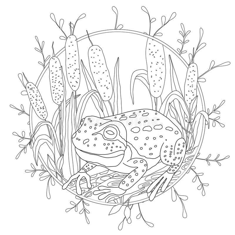A stylized frog sits among the reeds. Sketch for adult anti-stress coloring vector illustration
