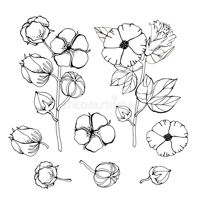 Stylized pictures set of white cotton flowers. Vector illustrations set. Cotton flower plant, organic ball fluffy boll royalty free illustration