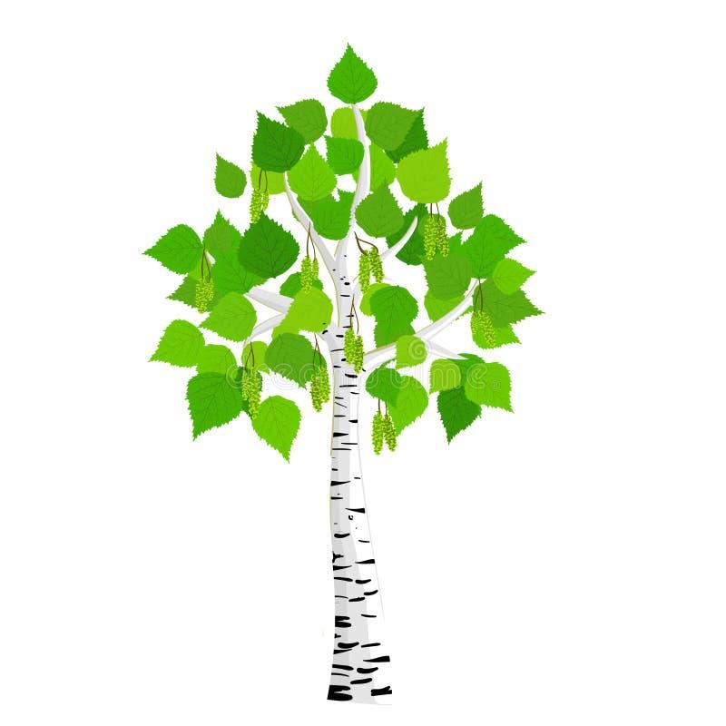 Wektorowy brzozy drzewo ilustracji