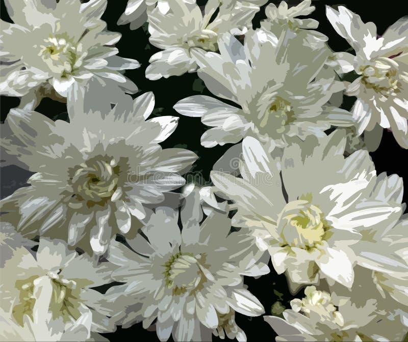 Stylizowane białe chryzantemy na ciemnym tle ilustracji