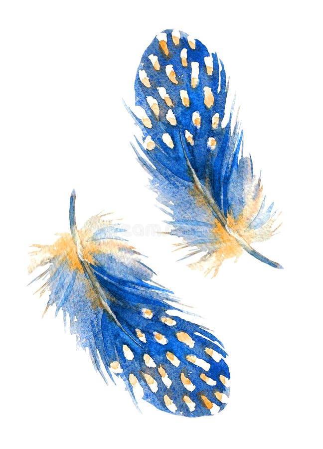 Stylizowany błękita piórko W kasku guineafowl Pociągany ręcznie akwareli ilustracja ilustracji