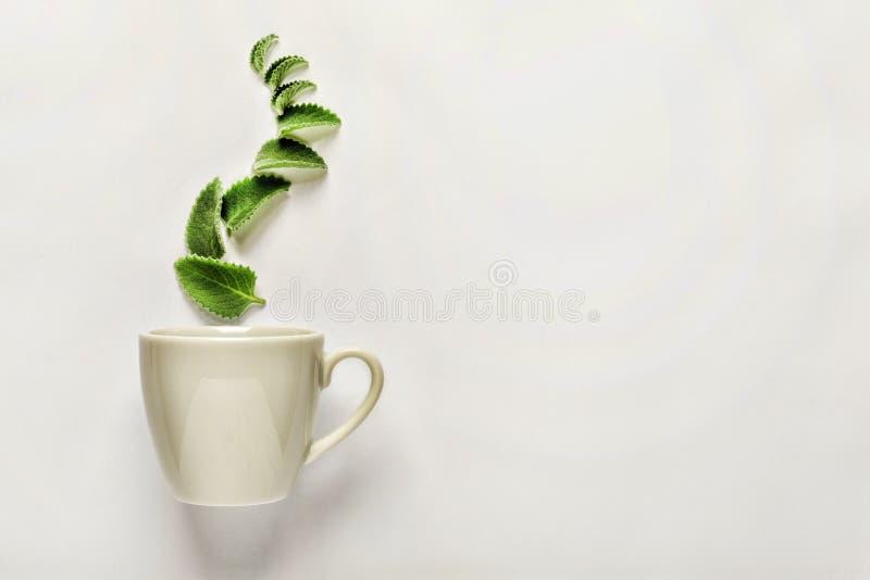 Stylowy minimalizm Filiżanka świeża zielona herbata lub ziołowa herbata z zielonymi nowymi liśćmi, above pojęcie aromatyczne iloś zdjęcie royalty free