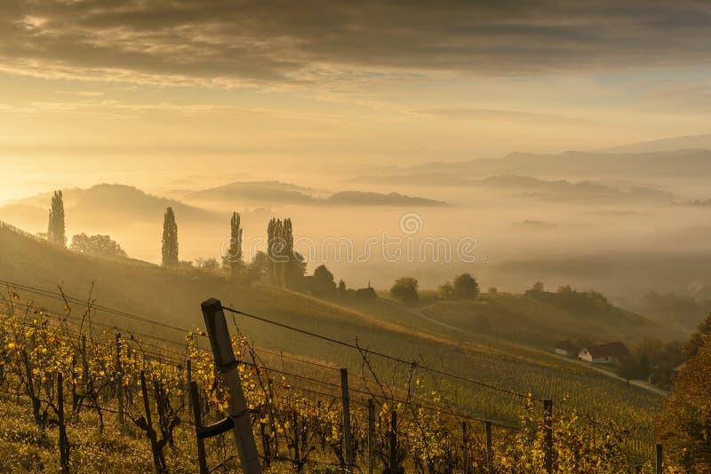 Styria. Foggy landscape in early morning, in South Styria Stajerska .Border Austria-Slovenia stock images