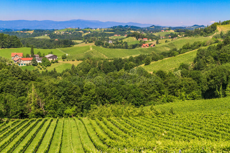 Styrian Tuscany Vineyard, Styria, Austria. Styrian Tuscany Vineyard near Leutschach, Styria, Austria stock image