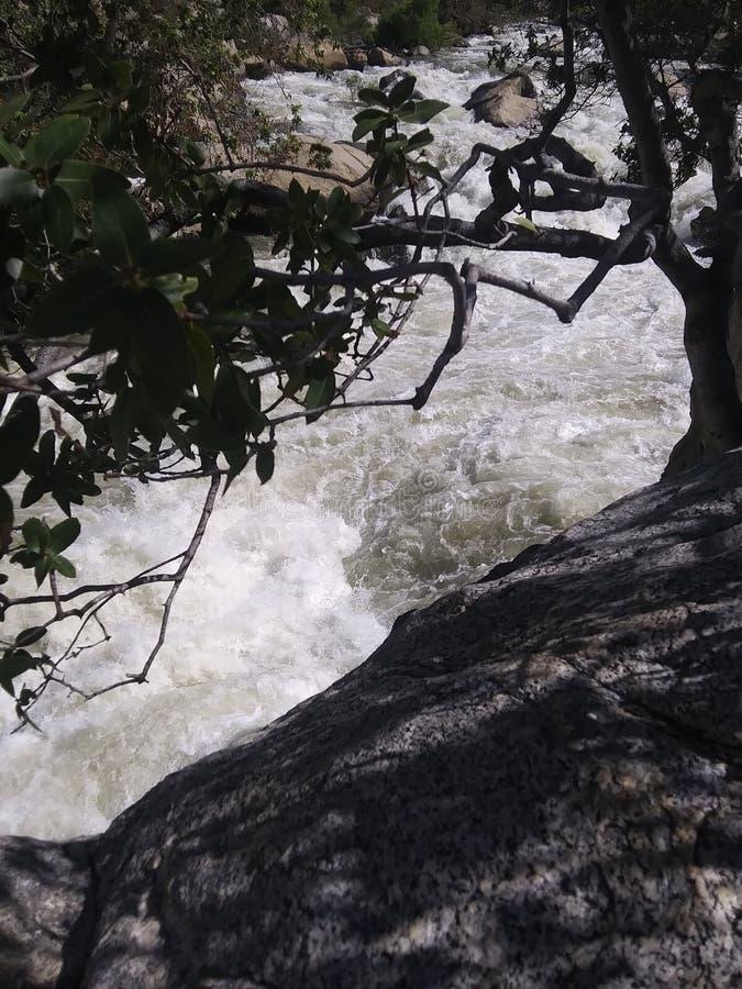 Styrkan av trädet i raseriet av floden arkivfoto