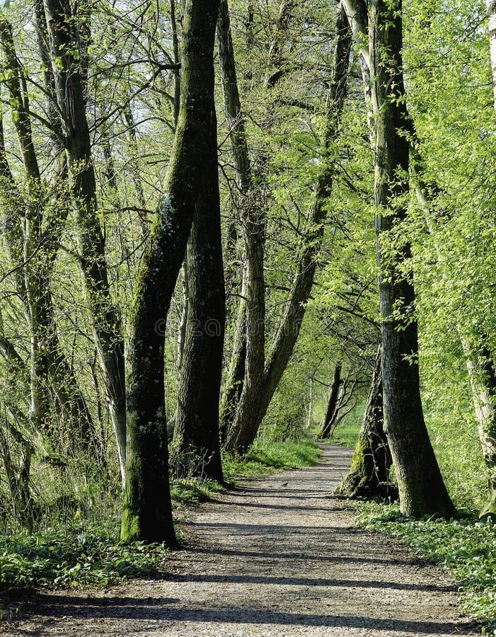 Suíça Aargau Beinwil am da paisagem da floresta vê a zona ribeirinho fotos de stock