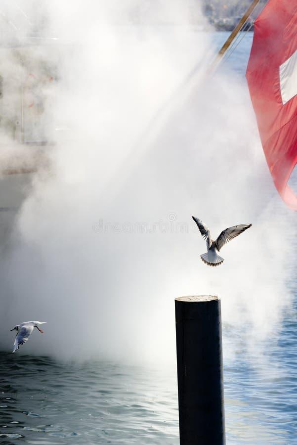 Suíça de Genebra, gaivotas joga no vapor de um barco que saa no lago Genebra fotos de stock royalty free