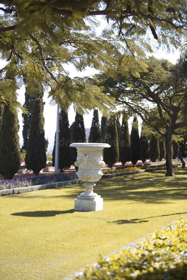 Su un prato inglese in mezzo ad un parco con gli alberi sempreverdi tagliati fotografia stock libera da diritti