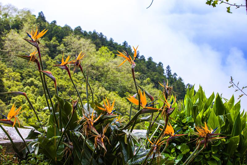 Su un punto di vista ricreativo lungo la strada a Furnas, sao Miguel Island, arcipelago delle Azzorre fotografia stock