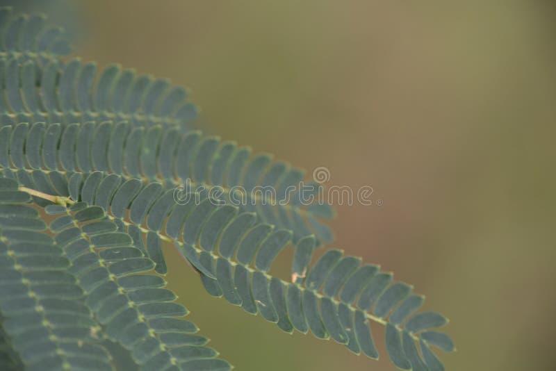 Suavemente hojas del compuesto imagen de archivo