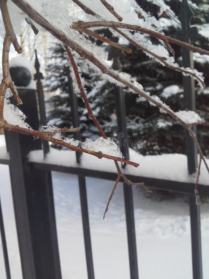 Suavemente, la nieve mullida miente en las ramas de árboles Después de nevadas foto de archivo libre de regalías