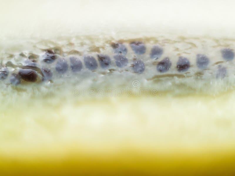 Sub verspreidende kiwizaden stock fotografie